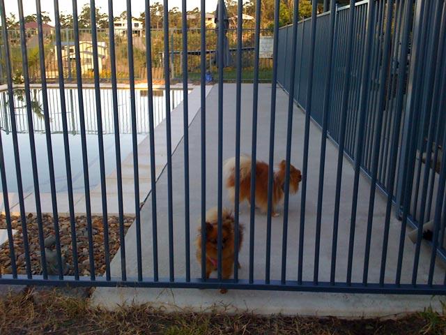Aluminium Doggie Panels