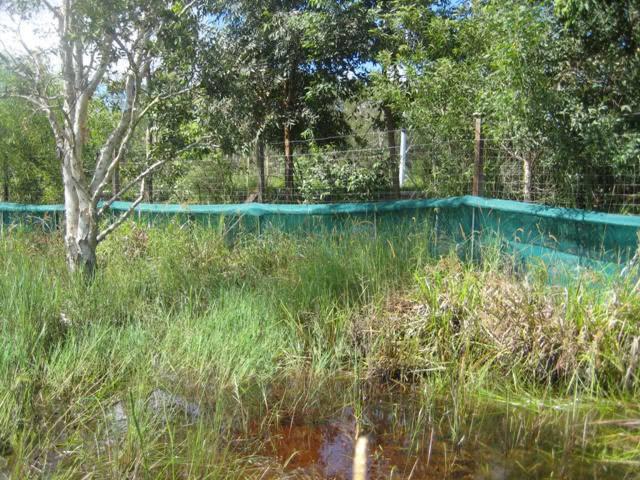 Frog Fence Pond