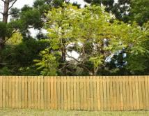 Treated Pine Timber Palings